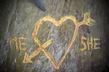 Birch tree with carved heart crossed by a love arrow