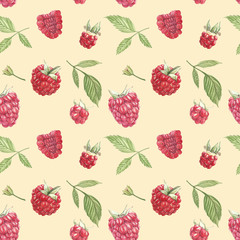 Hand drawn watercolor painting raspberry on white background. Botanical illustration. Seamless pattern