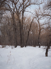 A snowy pathway through a deciduous forest. Footprints lead toward the bare trees.