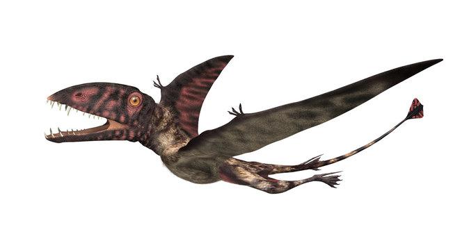 Dimorphodon Prehistoric Flying Reptile