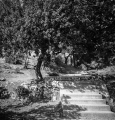 Stone steps at garden