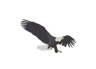 Bald Eagle Landing Illustration