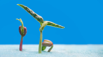 sprout of vegetables for preparing