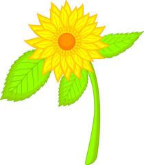 beauty sunflower cartoon