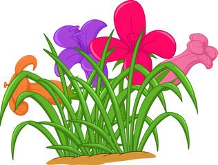 beauty orchid flower cartoon