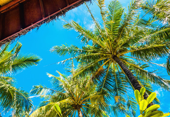 Exotic tall palm trees seen from below and blue sky
