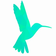 hummingbird illustration, vector draw