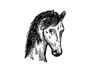 Head Horse Hand Drawn Symbol Icon Animal Logo Vector