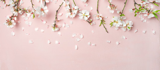 Spring floral background, texture, wallpaper. Flat-lay of white almond blossom flowers and petals over pink background, top view, copy space, wide composition. Womens day holiday greeting card Wall mural