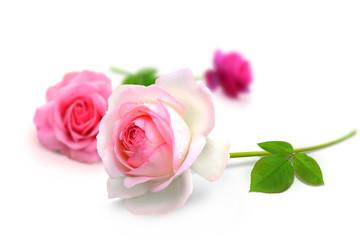 Blumen 922