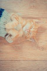 Little red kitten. cute little kitty is sleeping. The kitten lies on the wooden floor at home. Lovely Home