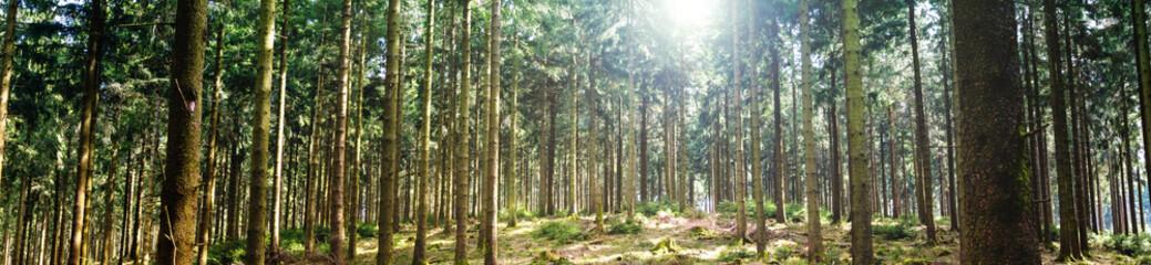 Wald Panorama
