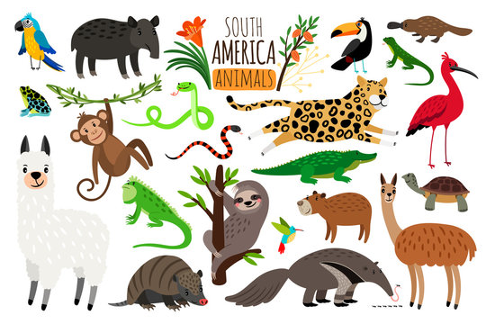 South America animals. Vector cartoon guanaco and iguana, anteater and ocelot, tapir and armadillo on white
