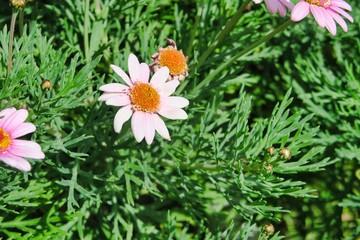 White Flowers Flores Blancas