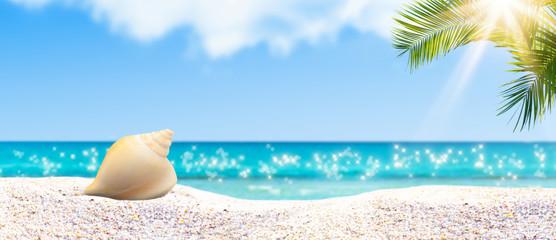 muschel, strand, palme, meer