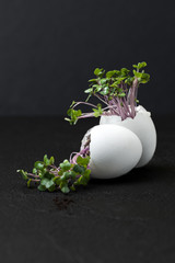 Fresh cress-salad in the eggshell on a black background..