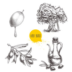 Olives fruit, branch, tree and olive oil bottle sketches set. Hand drawn vector illustrations isolated on white background.