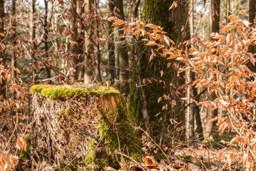 Stump of a tree in the middle of the forest
