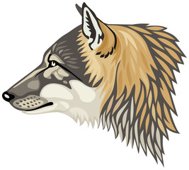 Wolf head profile, the gray wolf (Canis lupus), also known as the timber wolf or western wolf vector illustration
