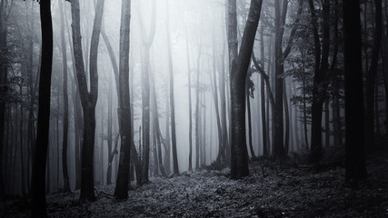 dark halloween woods background