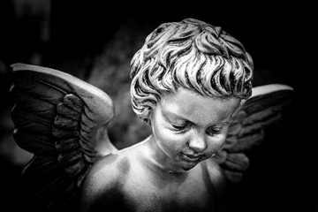 angel - black and white image