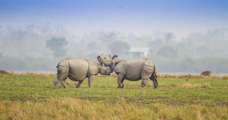 Foto op Aluminium Neushoorn Fighting Rhino