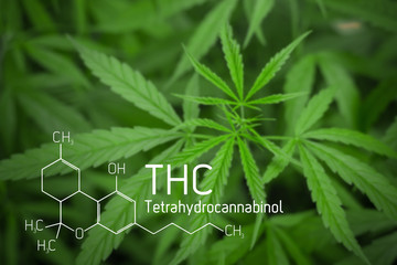 Cannabis Picture of  Formula THC