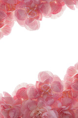 Pink Carnations isolated on a white background. Mother's Day greeting vertical Card. Concept for Woman Gift. Wedding Invitation. Flower Blossom Festival. Birthday Present.