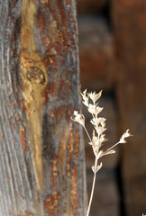 silhouette of dried flowers and plants on a background wood. Shallow depth of field