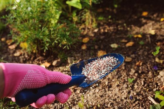 fertilizing garden plants in summer. Gardener hand in glove doing seasonal yardwork
