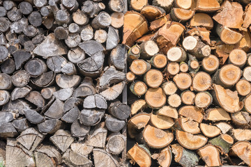 Altes getrocknetes und frisches nasses Brennholz im Vergleich nebeneinander
