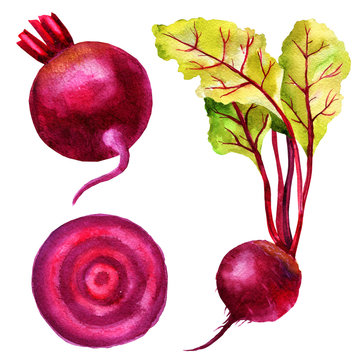 Watercolor illustration of root beet, leaves of chard, slice of beetroot, set of vegetables.