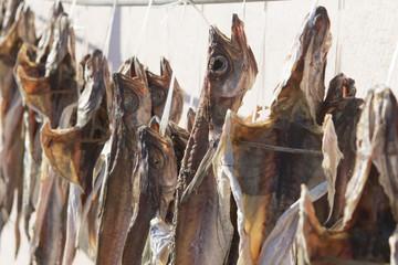 Fish drying in sun on balcony at Alpensia resort, Gangwon-do, South Korea