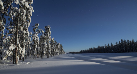 Tire tracks in snow near forest, Yellowknife, Northwest Territories, Canada