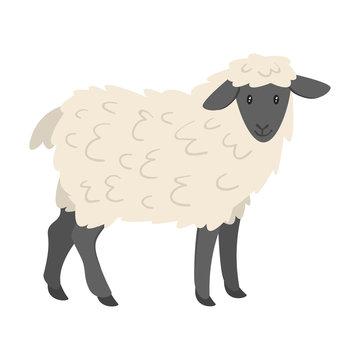 farm animal - sheep