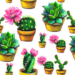 cactus, pattern,set of succulent, isolated on a white