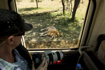 Woman with camera looking at lion while traveling in bus