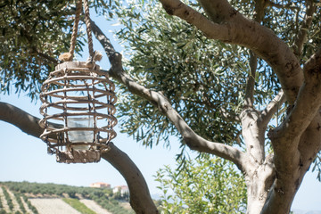 Birdcage hanging from tree