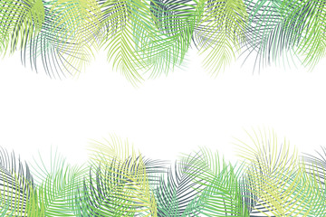 Tropical palm leaves background on white background