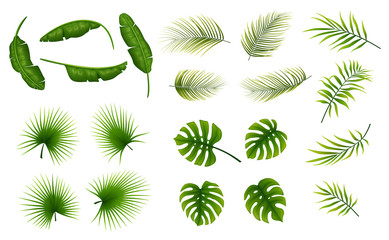 Set of tropical leaves plants on a white background