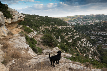 Dog and mountain landscape
