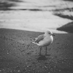 Seagull on the beach during the day time.