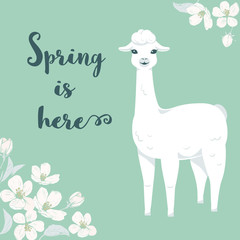 Cute cartoon llama character with cherry tree flowers and text Spring is here.