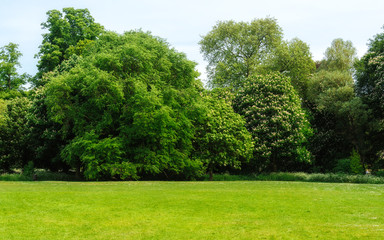 Green lawn with trees in background