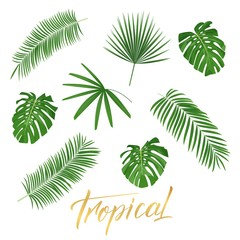 Tropical leaves. Set of isolated exotic leaves design elements