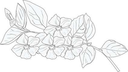 flower branch sketch isolated on white