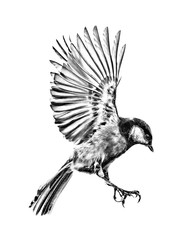 isolated sketch of fast great tit in flight
