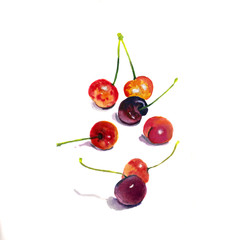 Ripe berry cherry. Watercolor Illustration of cherries. Watercolor painting. Realistic. Botanical. Isolated white background.
