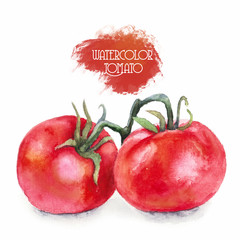 Red ripe tomatoes, watercolor painting. Illustration isolated on white background. Elements of design food products, fresh vegetables, hand-drawn illustrations. Closeup.