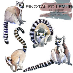 Ring-tailed Lemur hand drawn watercolor illustration set